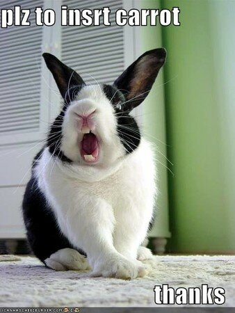 funny_pictures_rabbit_opens_mouth_for_carrot