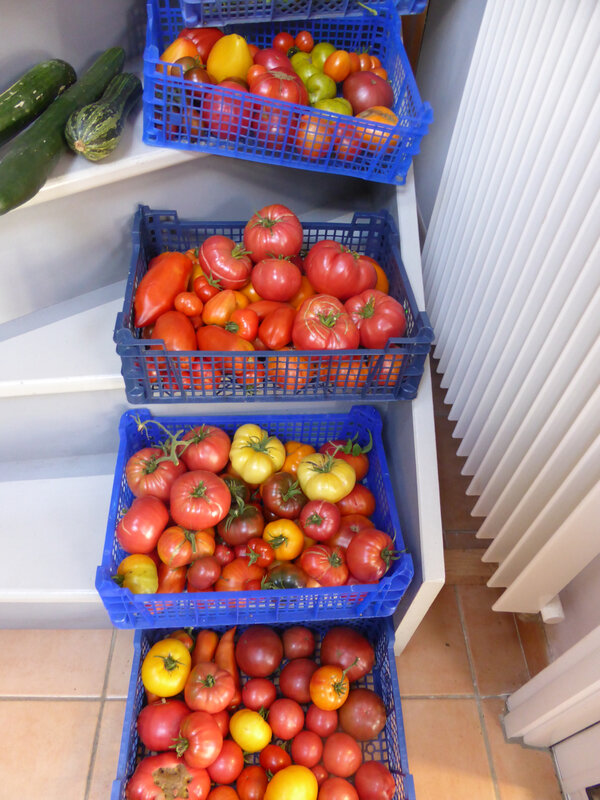 22-tomates, haricots, concombres, (1)
