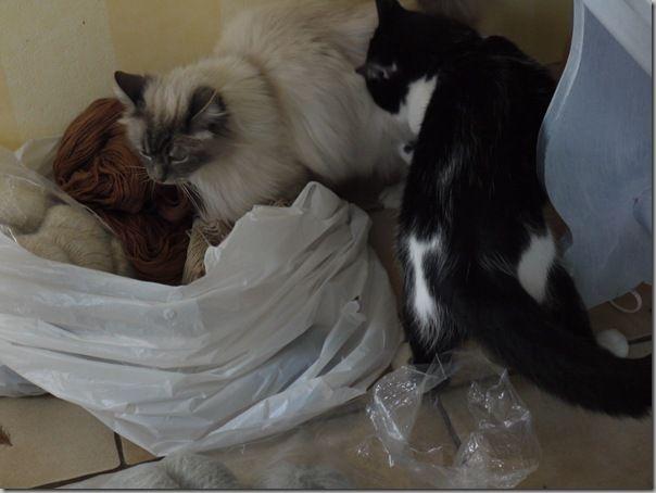 Cadeau Laurette- range aiguilles.23.01.2011 043