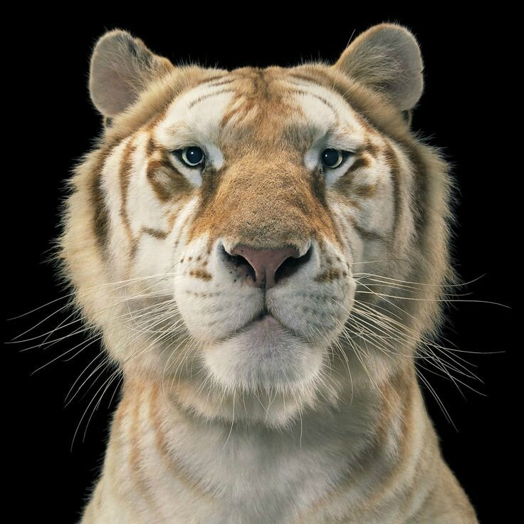 "Tim Flach, ""More Than Humans"""