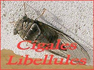 Cigales_etc