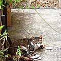 Un chat à deia