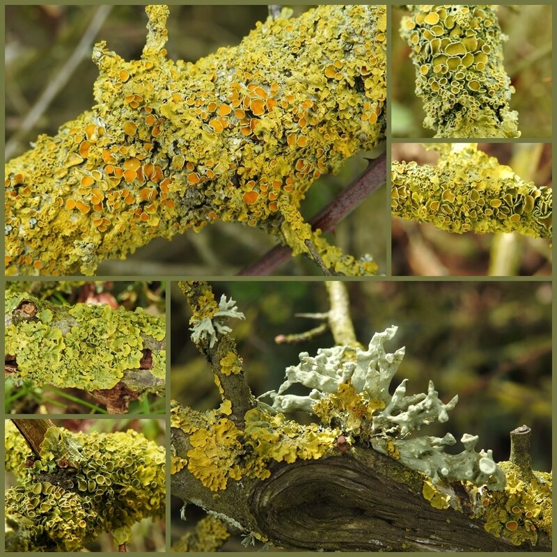 lichens 2 mars 2017