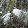 Neige à Nice le 11 Février 2010