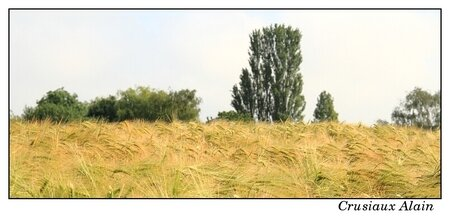 campagne_spodio_soignies_2012_06_18__10