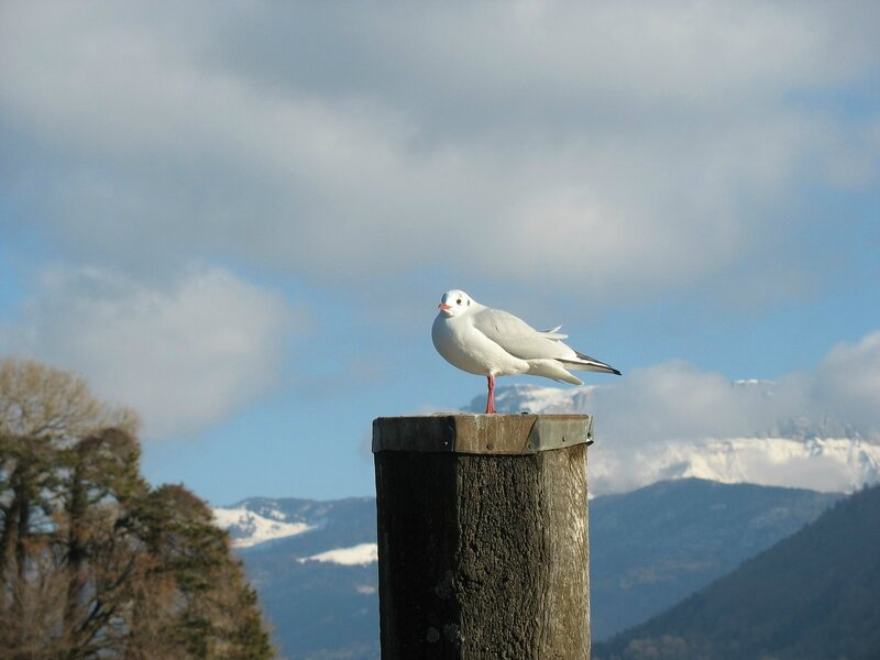 a-Mouette Annecy