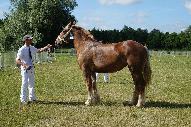 Furygane du Boncoin - 13 Juin 2017 - Concours d'élevage local - Bourbourg (59) - 1ere (2 ans)