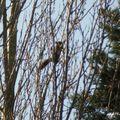 Chasse (photo) à l'écureuil