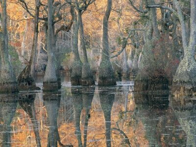 medford-taylor-sunlight-through-a-cypress-swamp-with-reflections