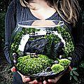 Comment faire un terrarium