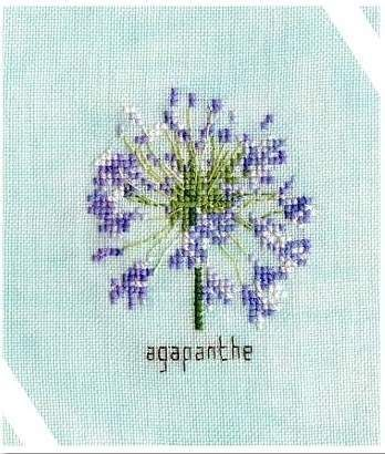 ''Agapanthe'' ( Orbispictura)