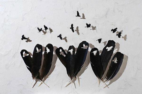 Art-avec-des-plumes-doiseaux-Chris-Maynard-photo-06