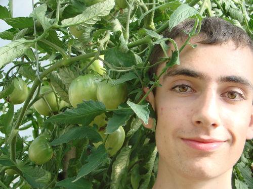 2008 08 02 Cyril et ses tomates coeur de boeuf