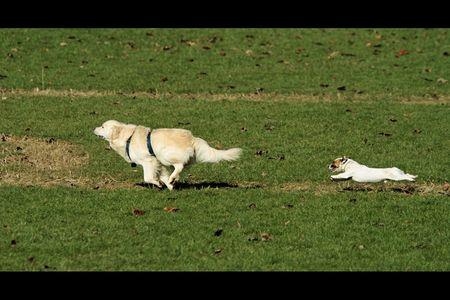 20110302_chiens