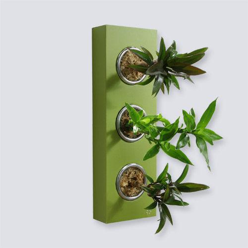 flowerbox mettre des plantes d coratives sur les murs. Black Bedroom Furniture Sets. Home Design Ideas