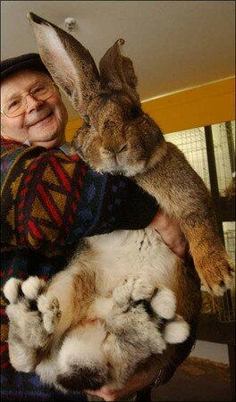 giant_rabbit