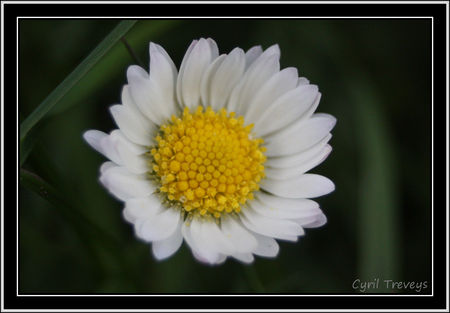 2010_05_18_Une_fleur_de_p_querette