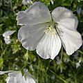 fleurs-de-breche (81)