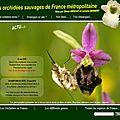 Nouveau site : les orchidées sauvages de france métropolitaine.