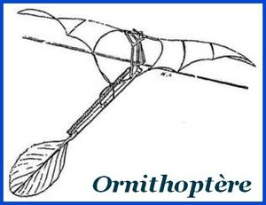 ornithoptere