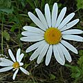 fleurs_1453 (7)