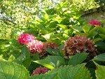 jardin_de_fin_d__t__6