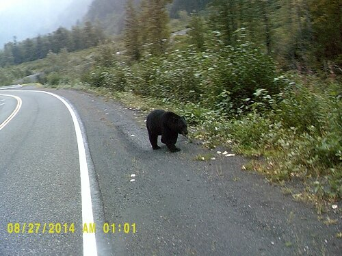 _copie-0_ours (5)