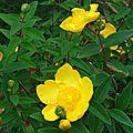 Fleurs de Leon 2406168