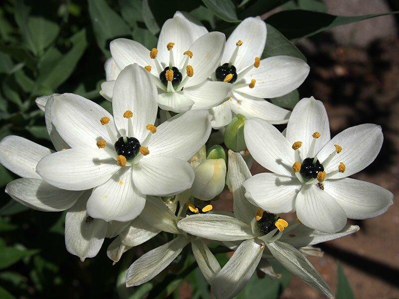 3387_fleur