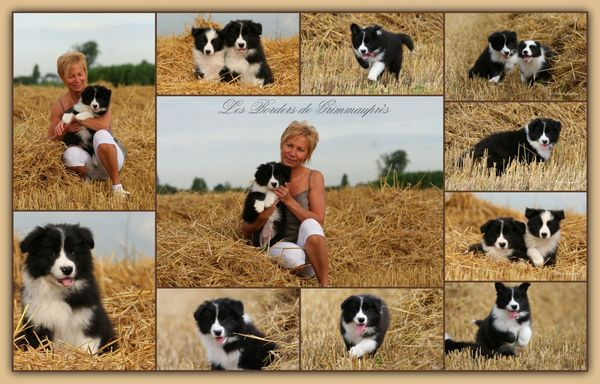 nich_e_Fly_et_seth_2012___chiots_8_semaines_