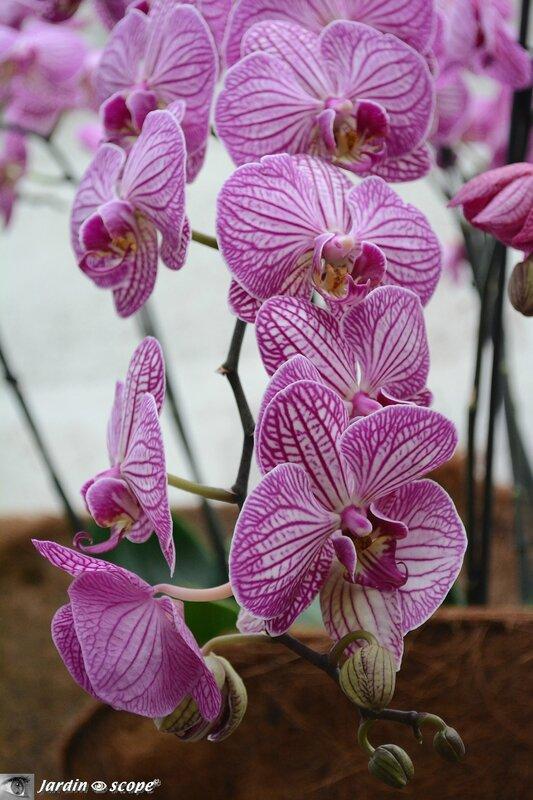 Orchidée-280