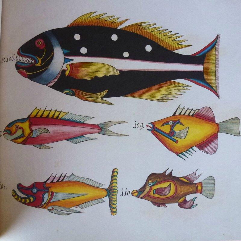 poissons tropicaux 5