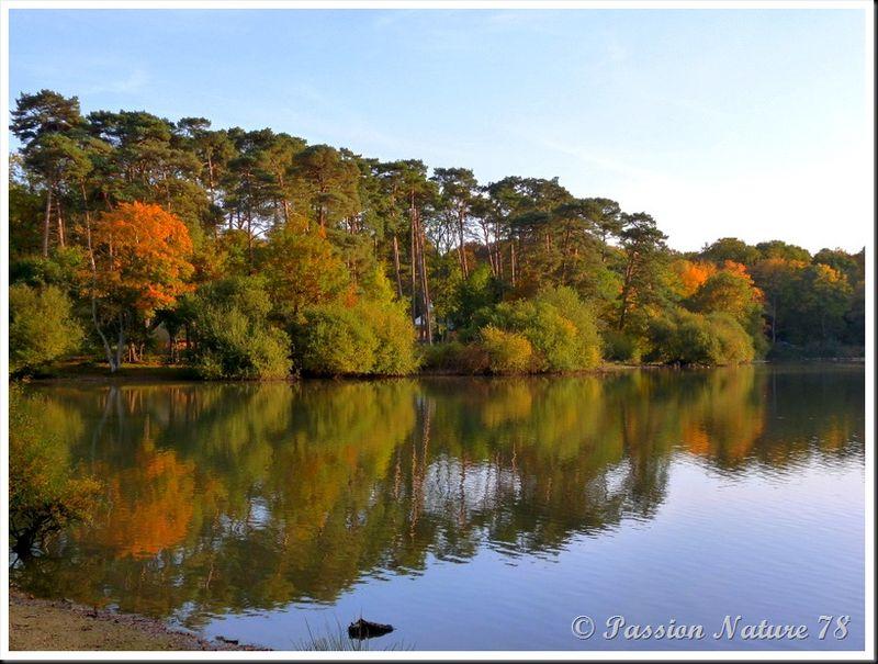 L'étang d'Or (23)