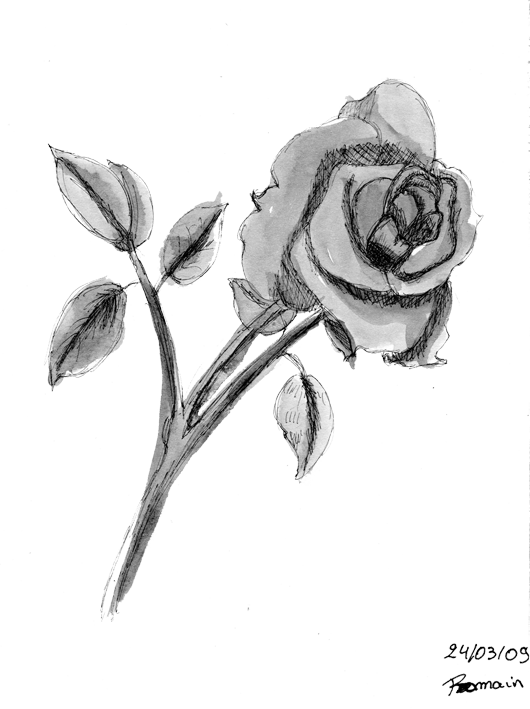 Rose song les machins - Rose noir dessin ...