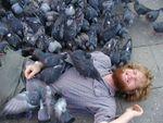 Pigeons_aggressifs