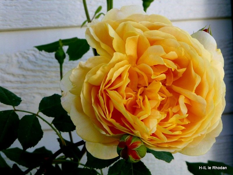 06-Fleurs 2013-06-06 (6)