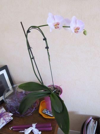 orchidéesetc 022