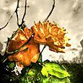 2014_09_21_15_f