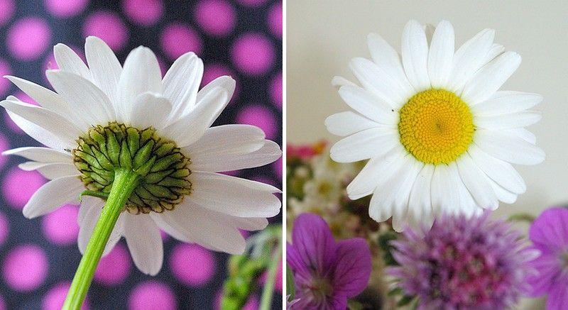 fleurs_jolies