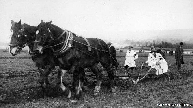plough-horses-q_54601