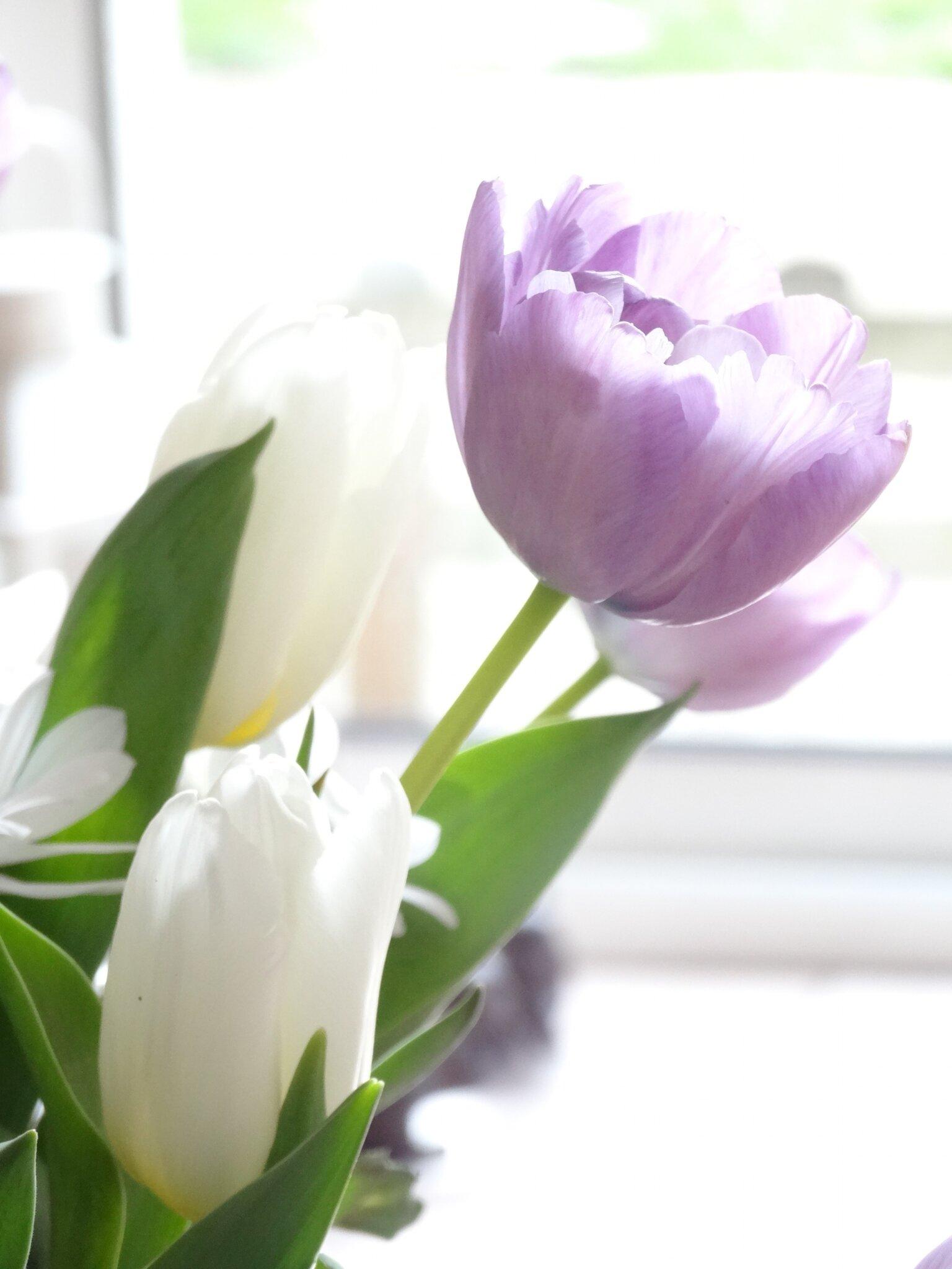 Envie de printemps...