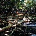 Ile Nouvelle, laisse d'estuaire et bois flottés