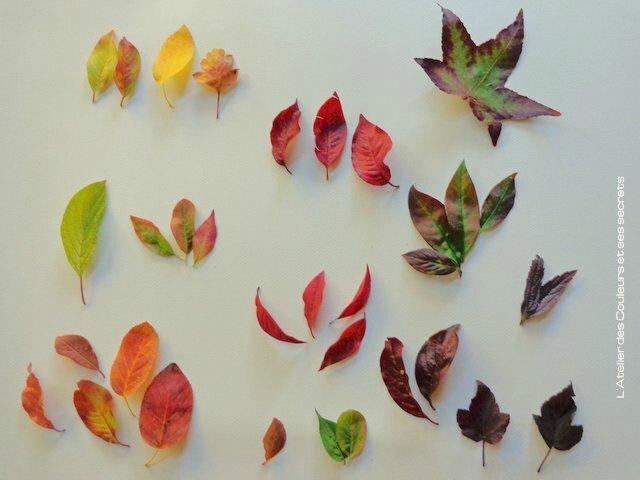 feuilles-couleuretsecret