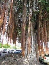 2 arbre philaos_ [320x200]