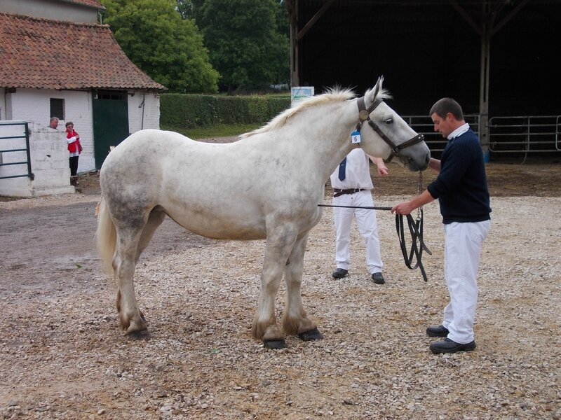Charmeuse de Wierre - 4e 3 ans - Local d'Hucqueliers - 21 Juin 2015 - Photo Babeth