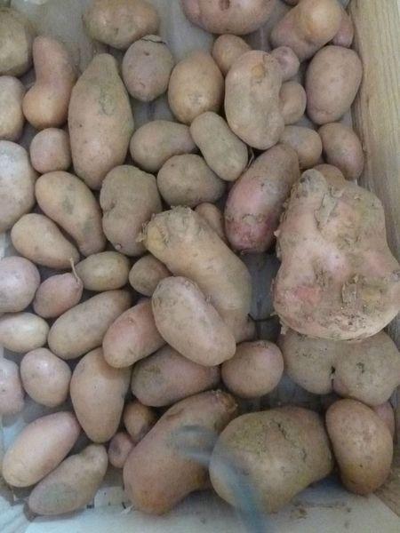 01-pommes de terre (1)
