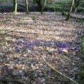 les jolies fleurs mauves sont partout