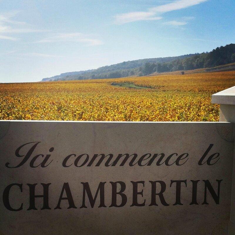 Gevrey-Chambertin, vignes (21)