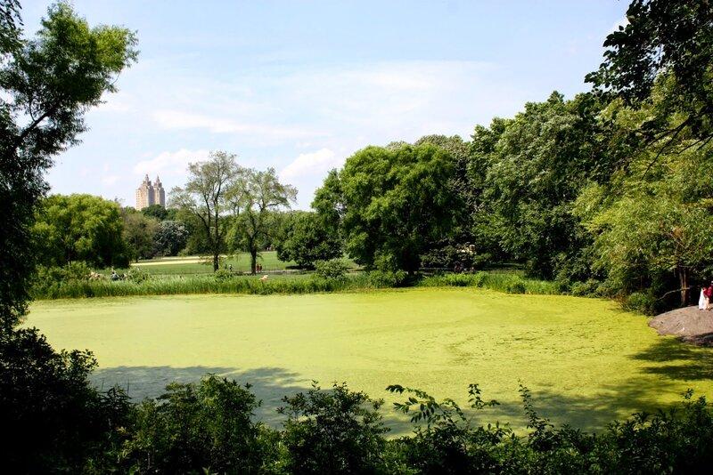 J10 - 07 juillet 2014 - Central park (8).JPG