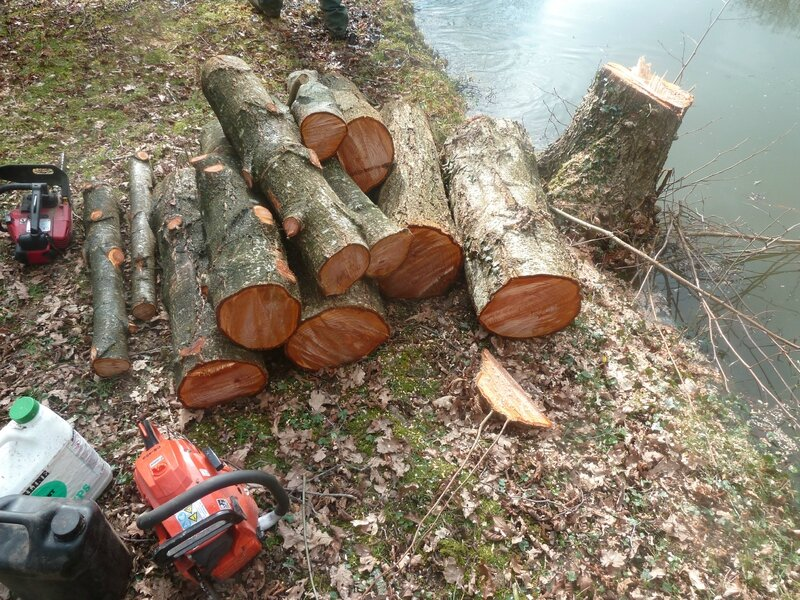 14mars-abattage arbres (80)